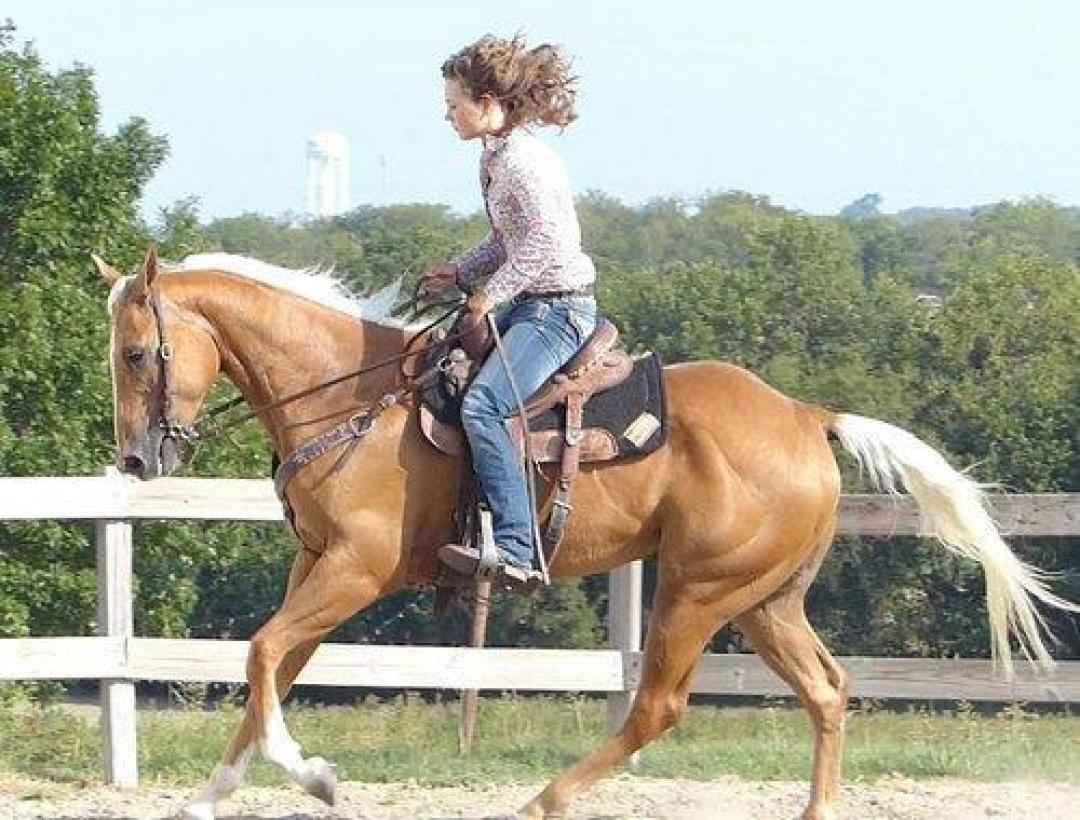 Pferd Zu Verfügung
